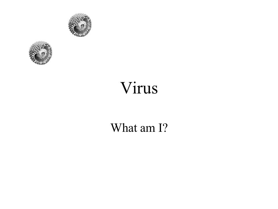 Virus What am I