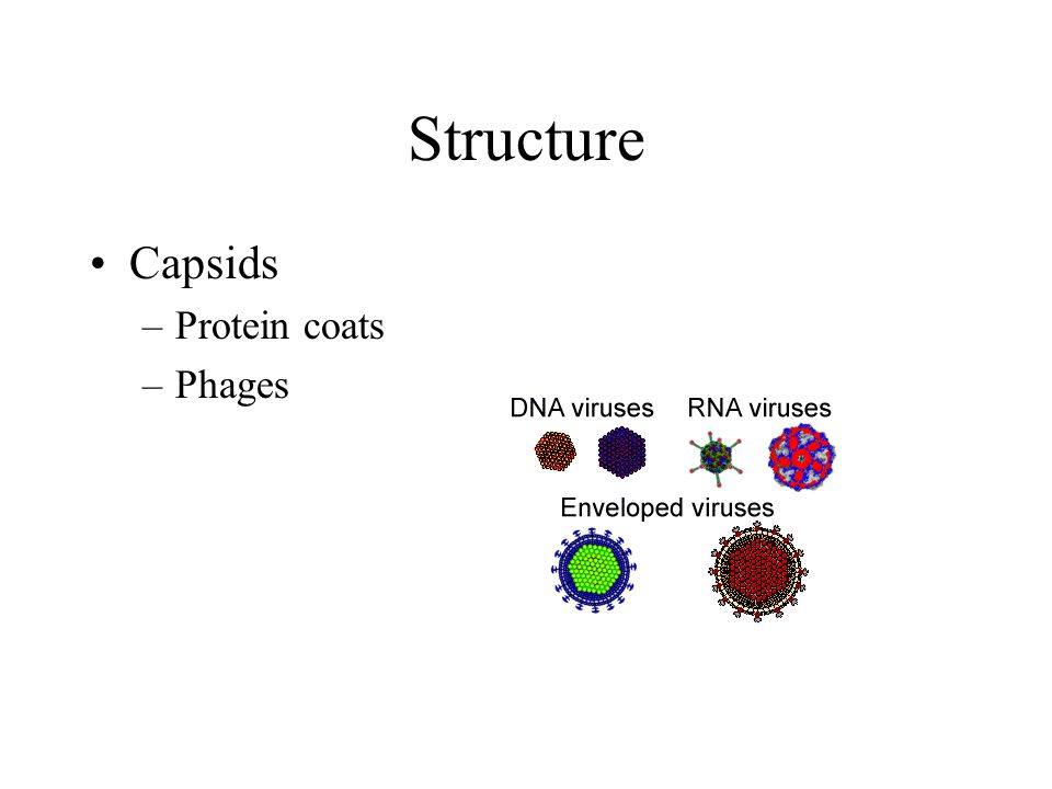 Structure Capsids Protein coats Phages