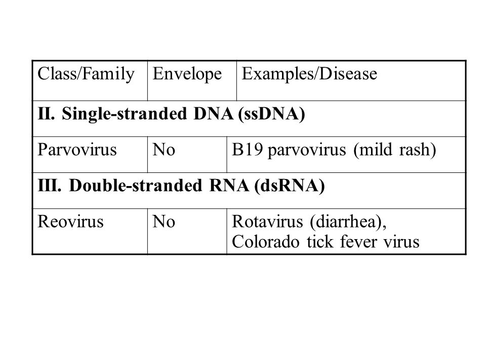II. Single-stranded DNA (ssDNA) Parvovirus No