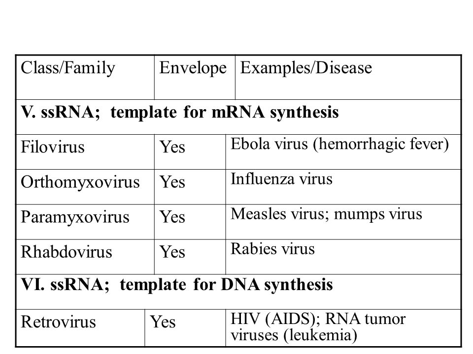 V. ssRNA; template for mRNA synthesis Filovirus Yes Orthomyxovirus