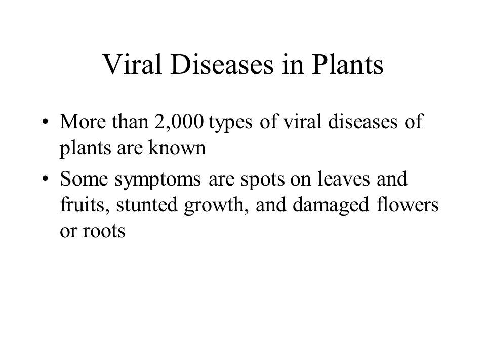 Viral Diseases in Plants