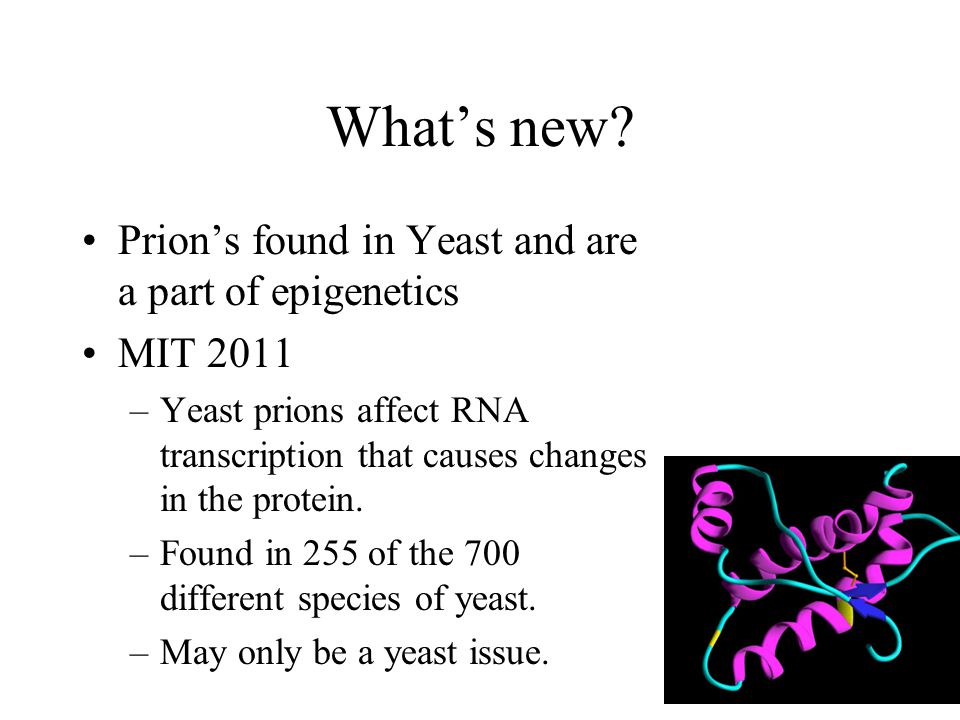 What's new Prion's found in Yeast and are a part of epigenetics