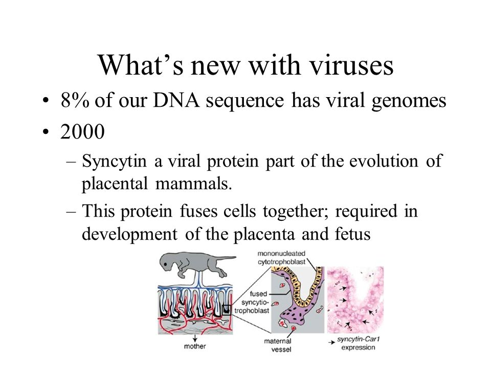 What's new with viruses