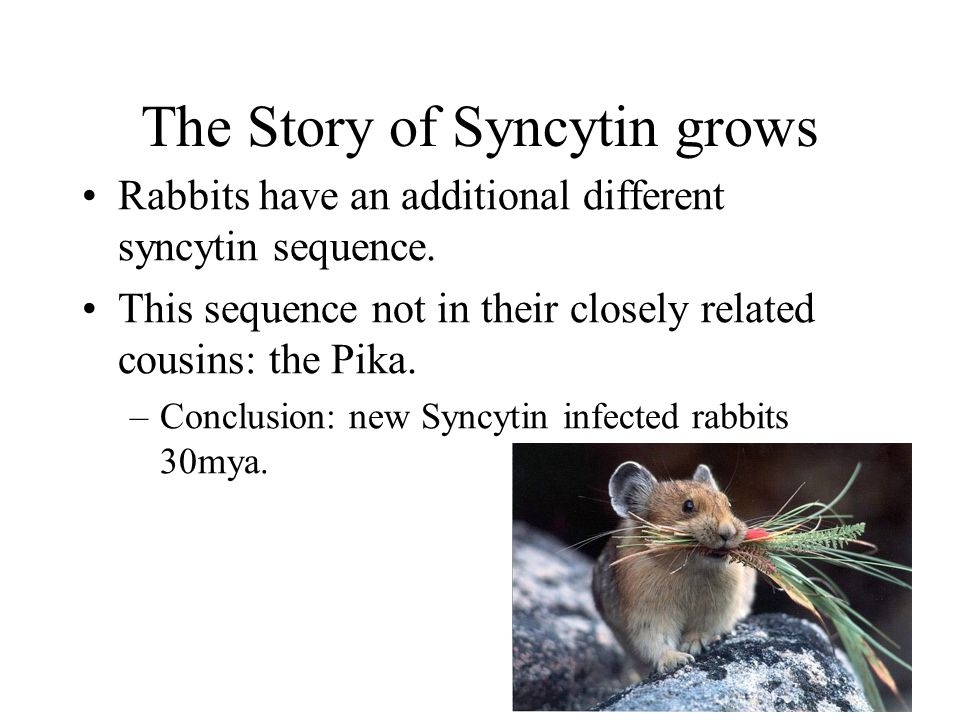 The Story of Syncytin grows