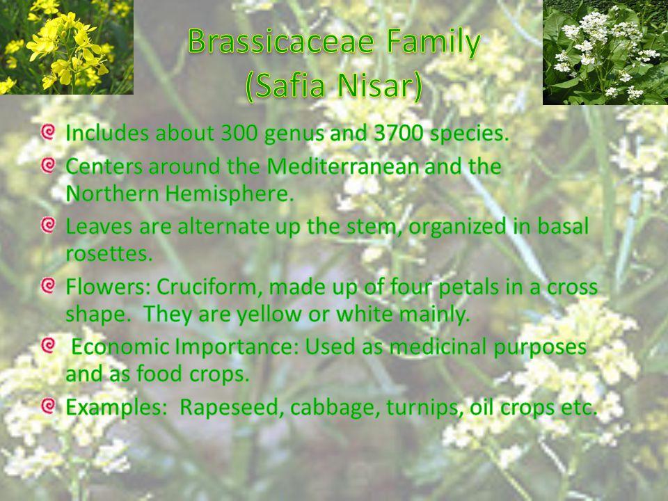 Brassicaceae Family (Safia Nisar)