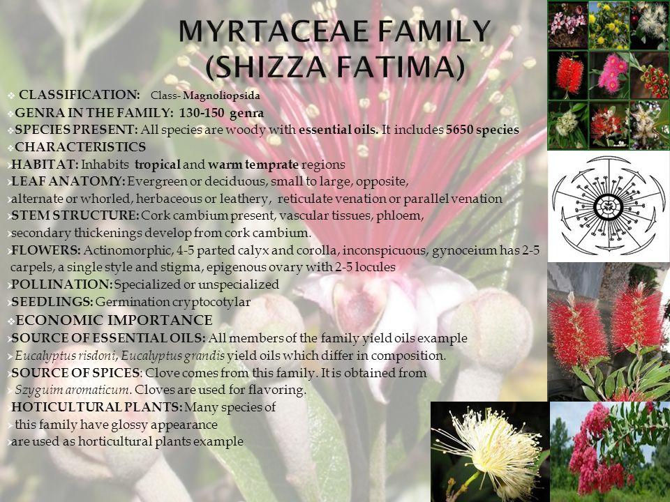 MYRTACEAE FAMILY (shizza fatima)