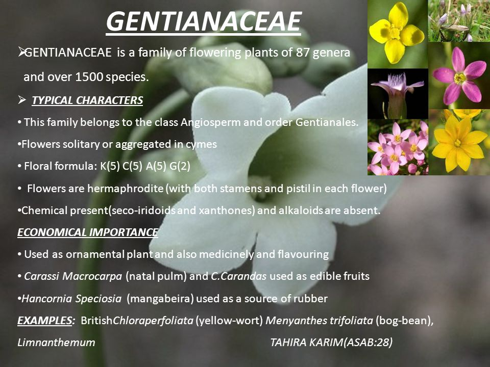 GENTIANACEAE GENTIANACEAE is a family of flowering plants of 87 genera