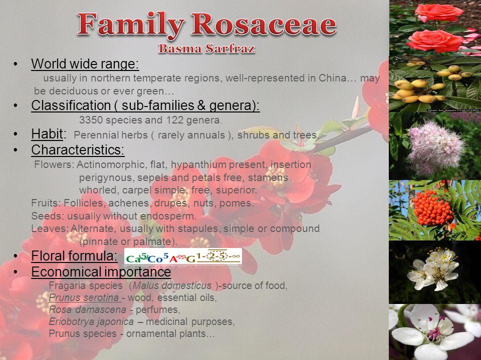 Family Rosaceae Basma Sarfraz