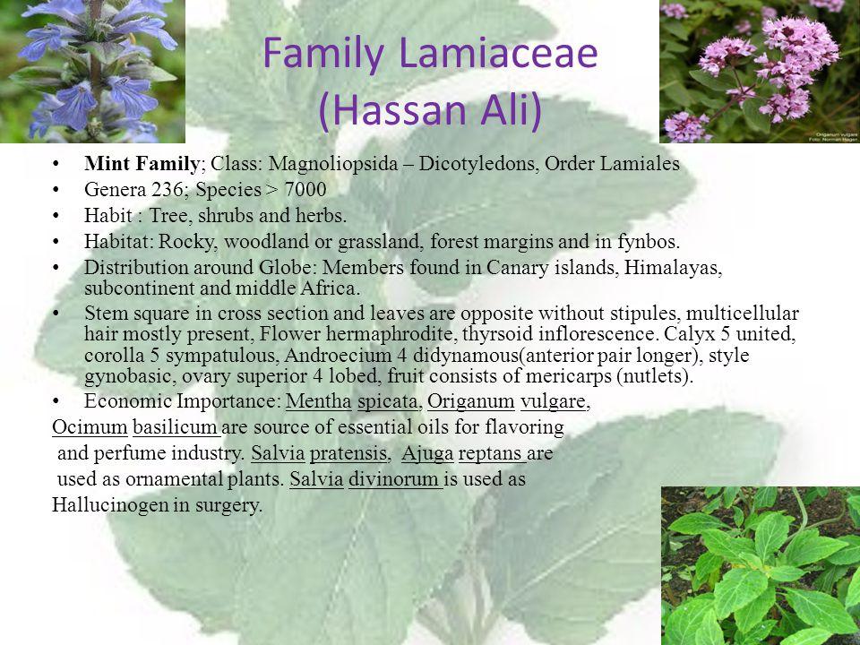 Family Lamiaceae (Hassan Ali)