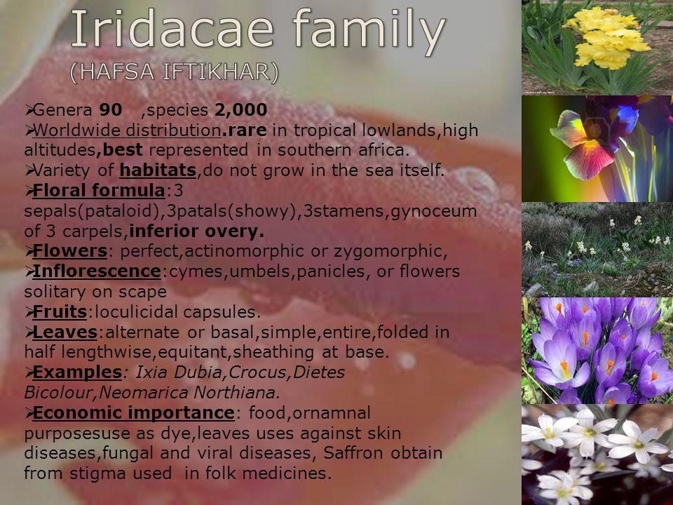 Iridacae family (HAFSA IFTIKHAR) Genera 90 ,species 2,000