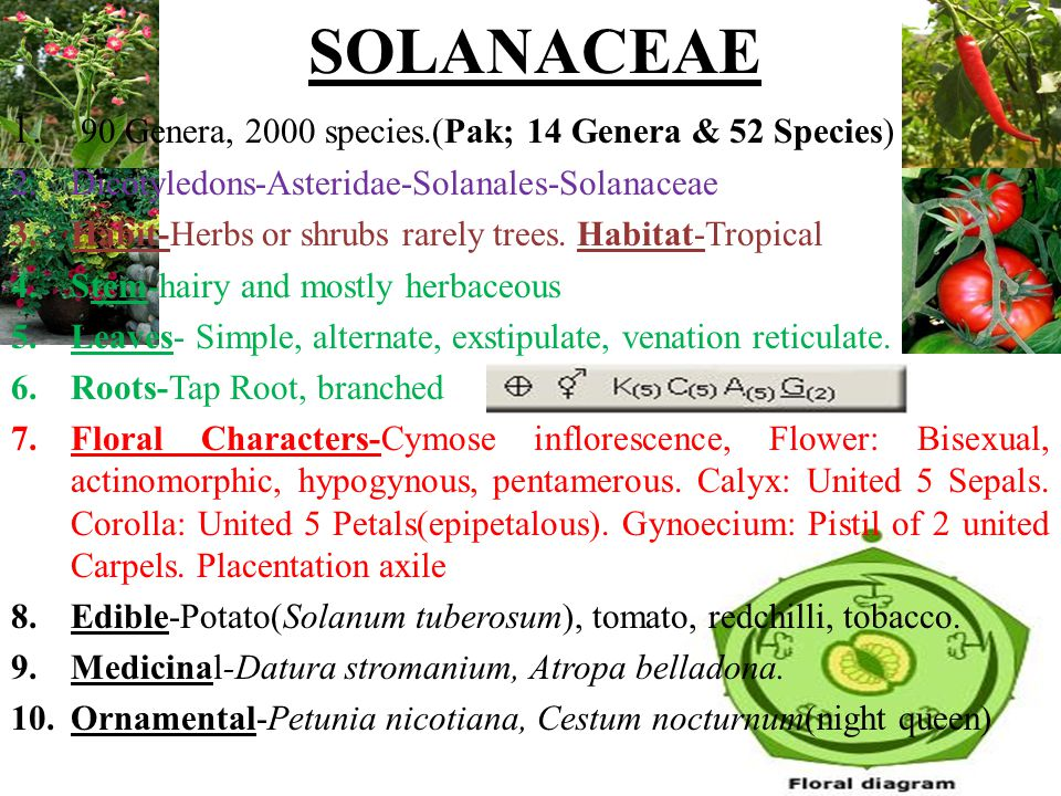 SOLANACEAE 90 Genera, 2000 species.(Pak; 14 Genera & 52 Species)