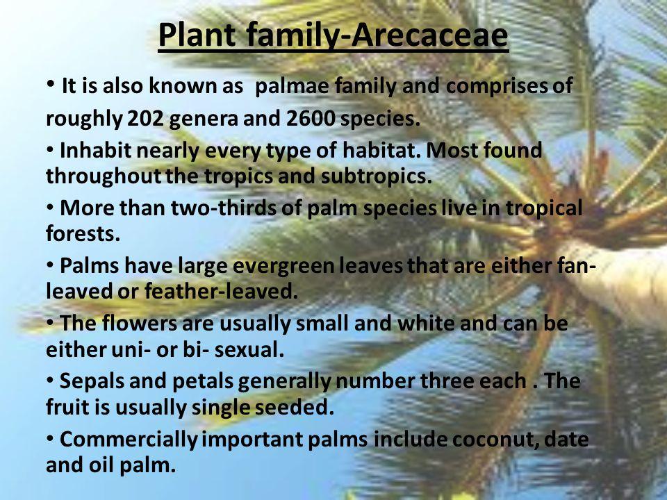 Plant family-Arecaceae
