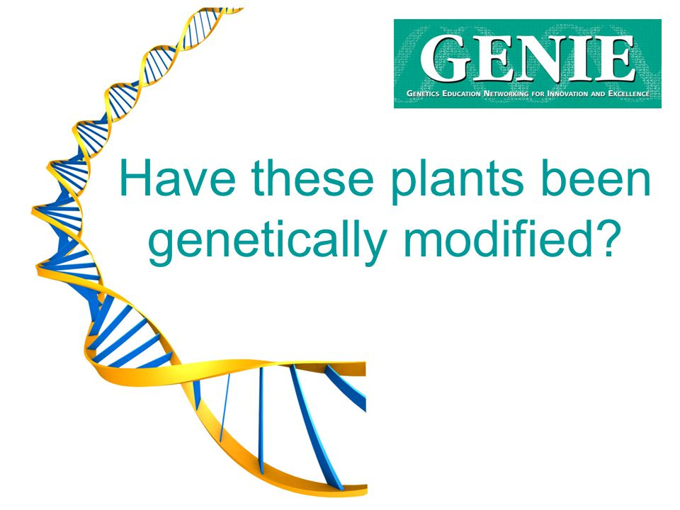 Have these plants been genetically modified