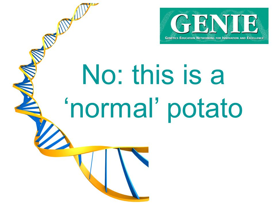 No: this is a 'normal' potato