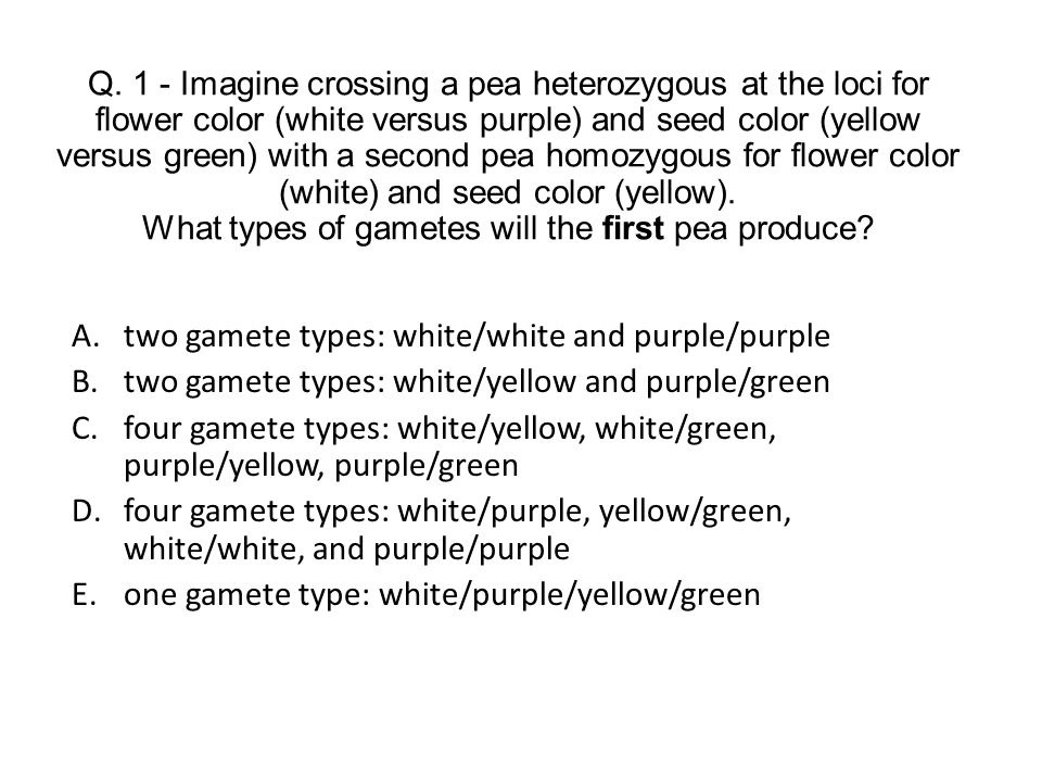 two gamete types: white/white and purple/purple