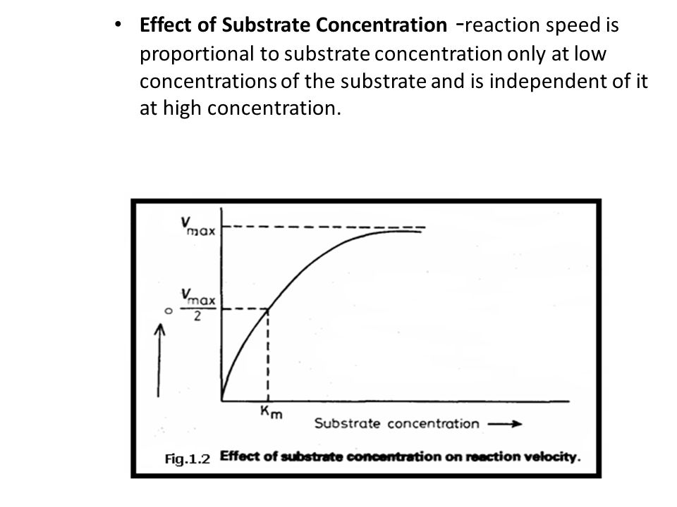 Effect of Substrate Concentration -reaction speed is proportional to substrate concentration only at low concentrations of the substrate and is independent of it at high concentration.