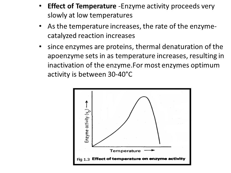 Effect of Temperature -Enzyme activity proceeds very slowly at low temperatures