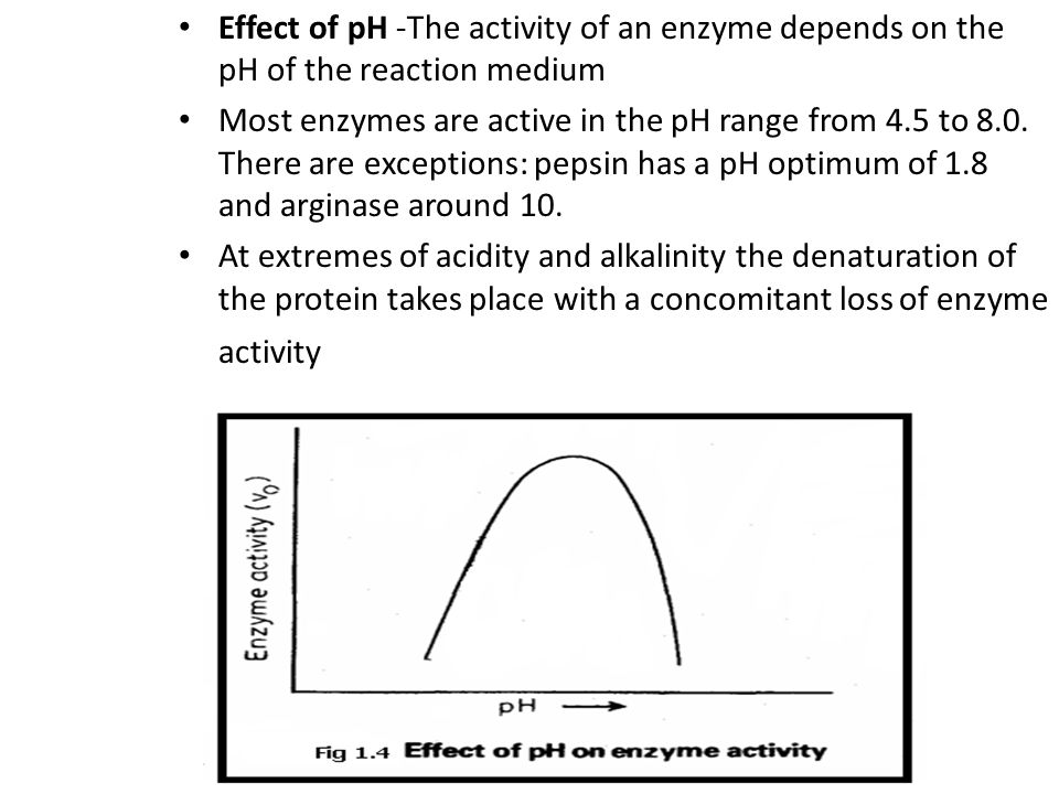 Effect of pH -The activity of an enzyme depends on the pH of the reaction medium