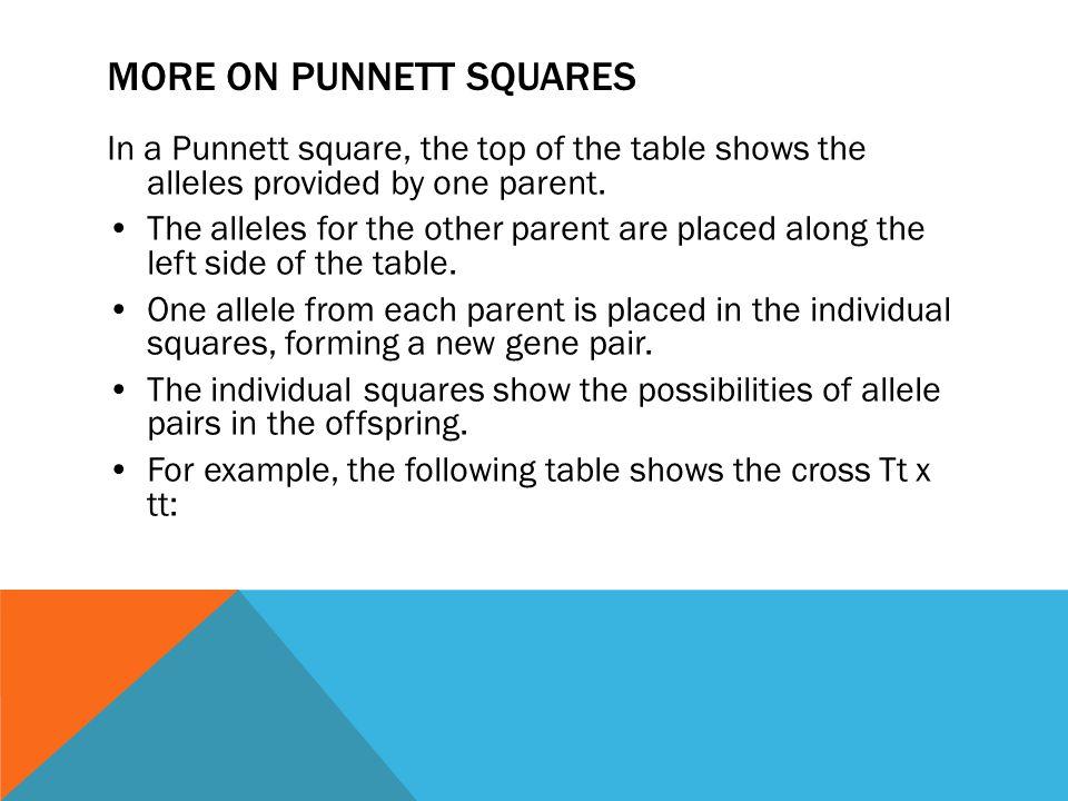 More on Punnett Squares