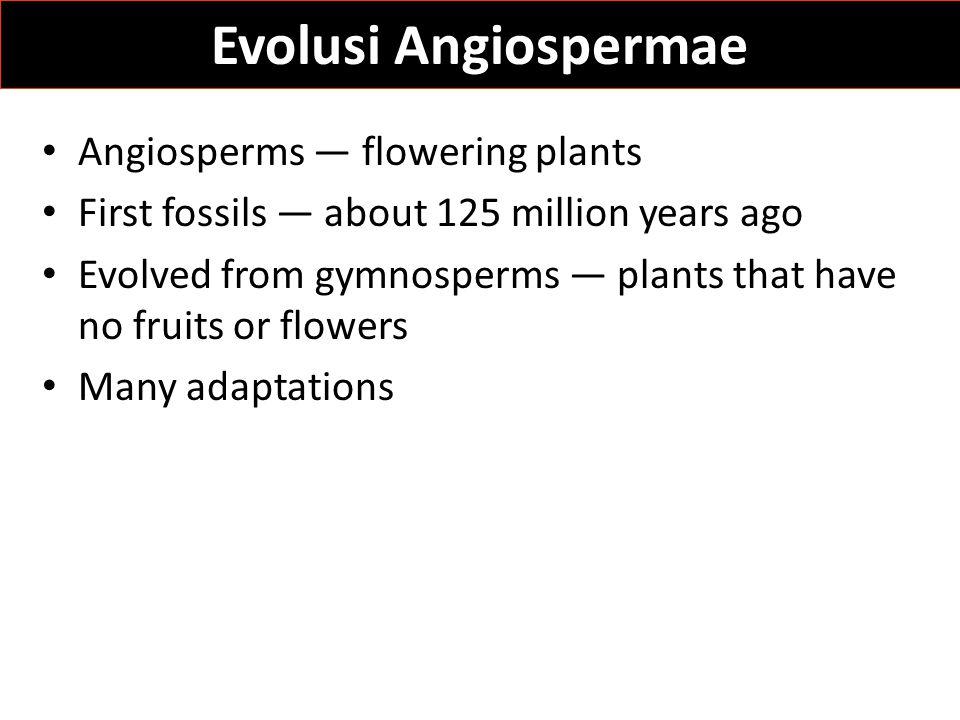 Evolusi Angiospermae Angiosperms — flowering plants