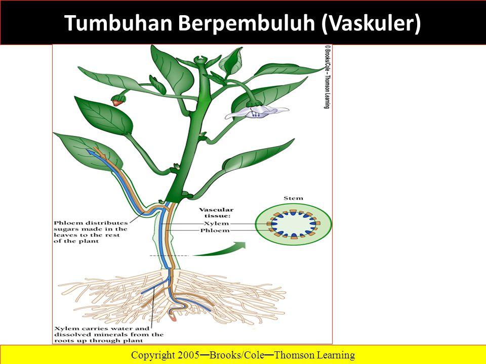 Tumbuhan Berpembuluh (Vaskuler)
