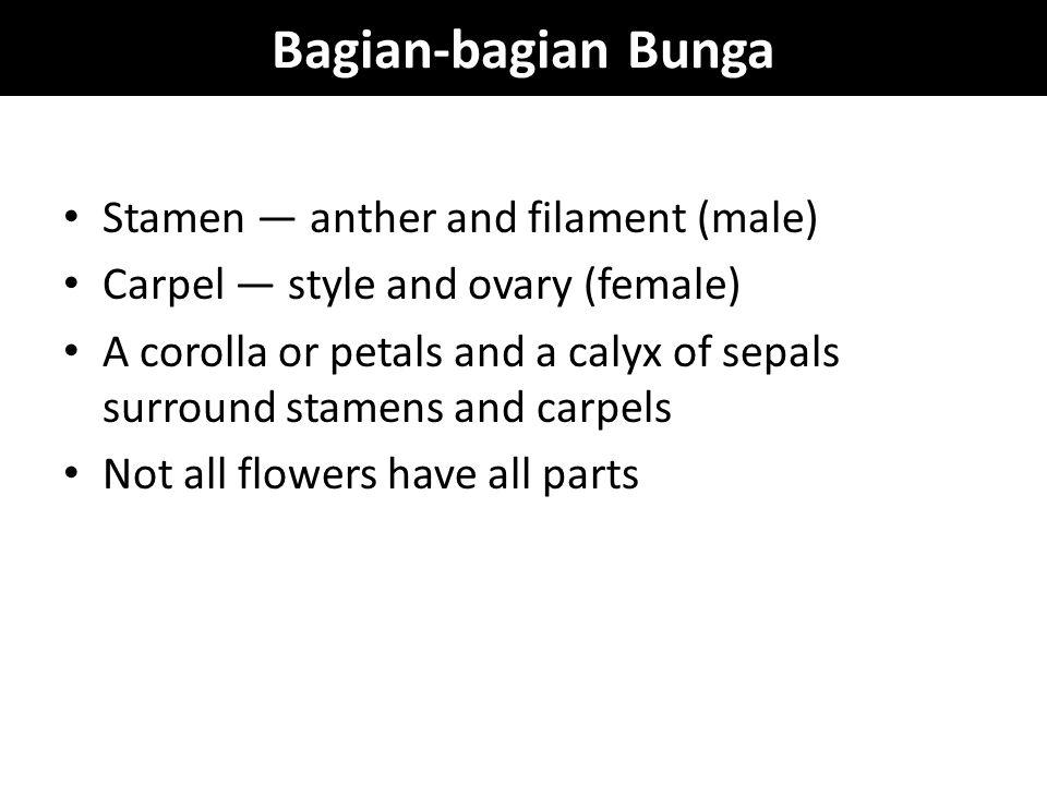 Bagian-bagian Bunga Stamen — anther and filament (male)