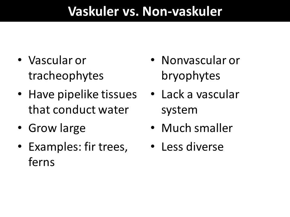 Vaskuler vs. Non-vaskuler