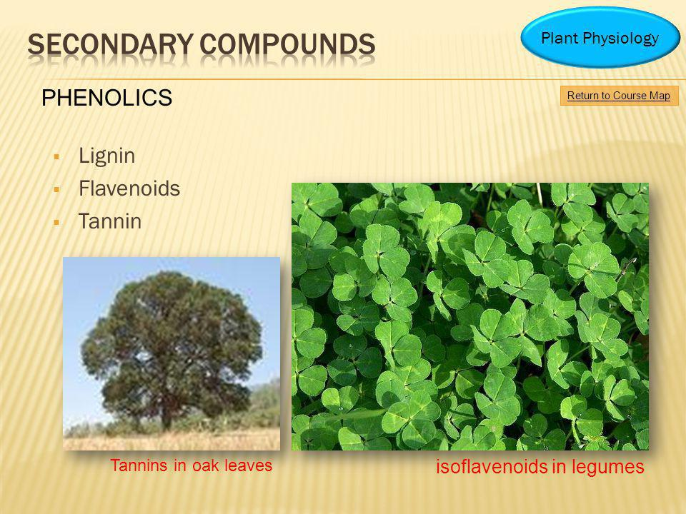 Secondary Compounds PHENOLICS Lignin Flavenoids Tannin