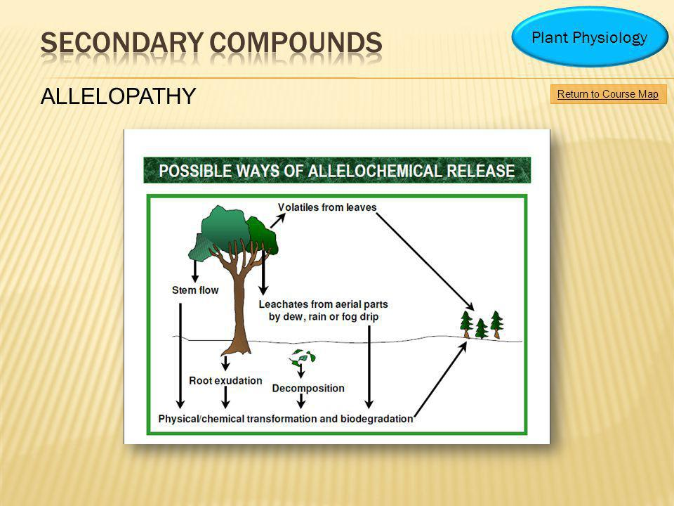 Secondary compounds ALLELOPATHY Plant Physiology