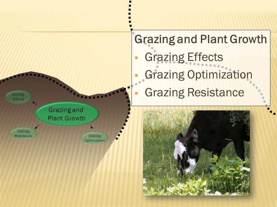 Grazing and Plant Growth Grazing Effects Grazing Optimization