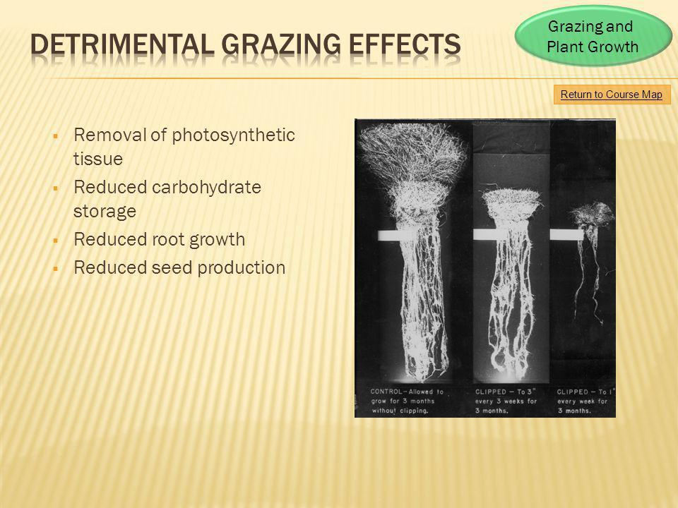 Detrimental Grazing Effects