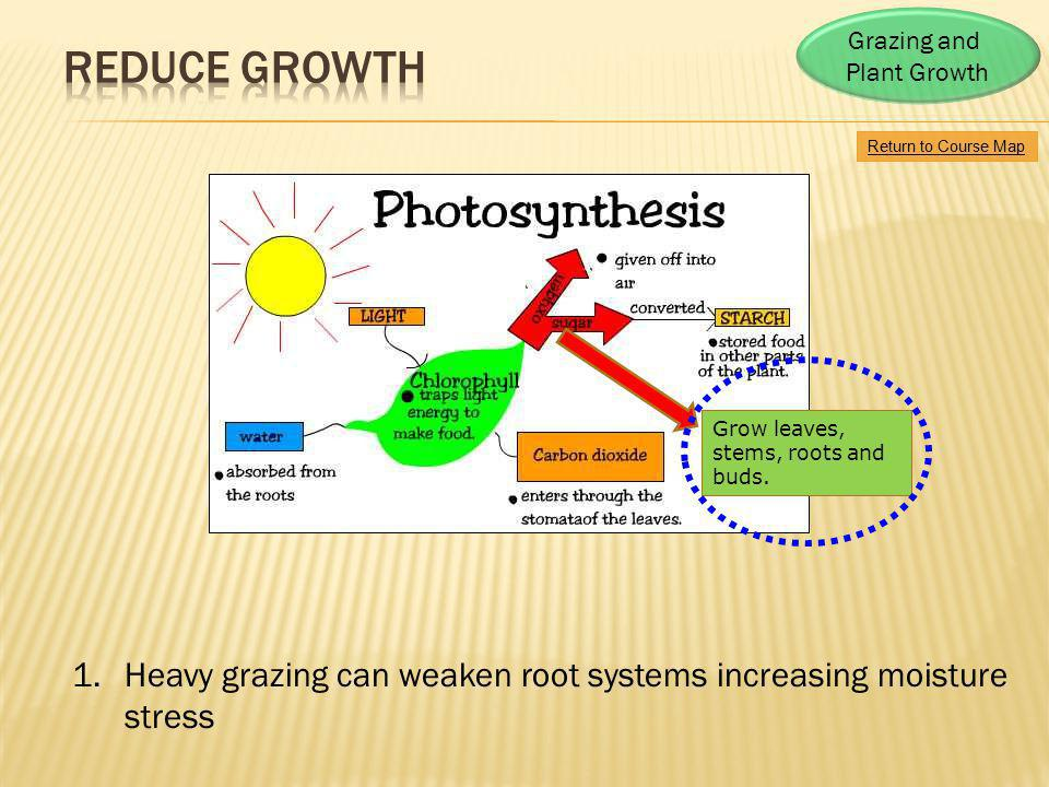 Grazing and Plant Growth. reduce growth. Return to Course Map. Return to Course Map. Grow leaves, stems, roots and.