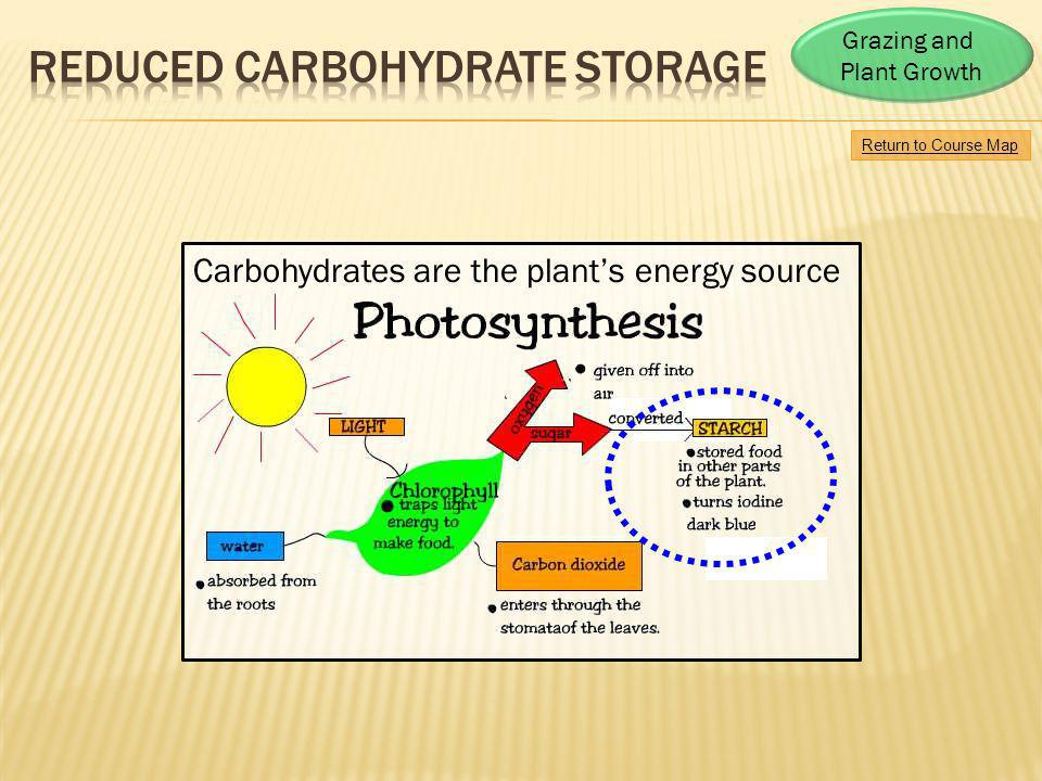 Reduced carbohydrate storage