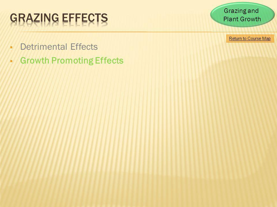 Grazing Effects Detrimental Effects Growth Promoting Effects