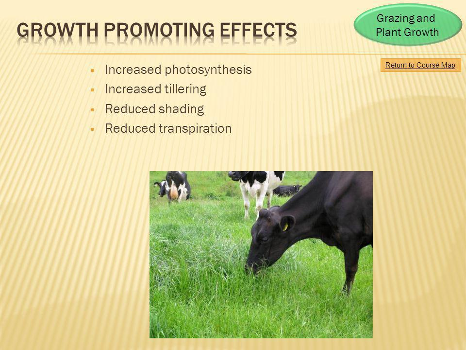 Growth Promoting Effects
