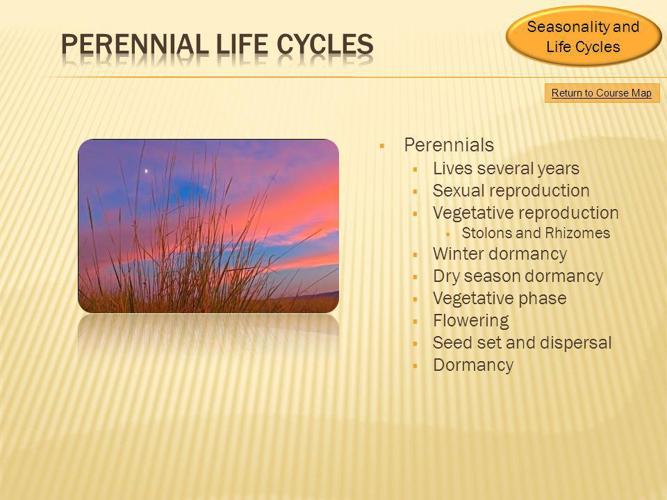 Perennial Life Cycles Perennials Lives several years