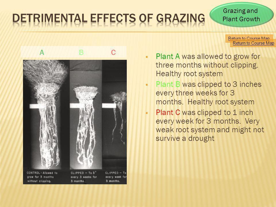 Detrimental Effects of Grazing