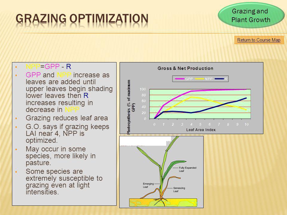 Grazing Optimization Grazing and Plant Growth NPP=GPP - R