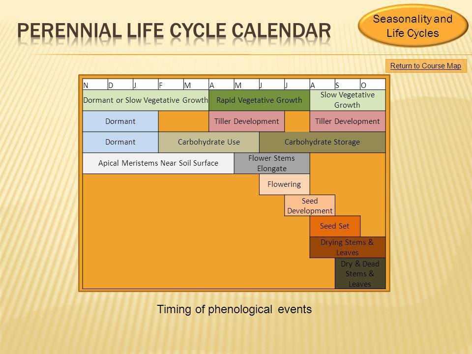 perennial life cycle CALENDAR