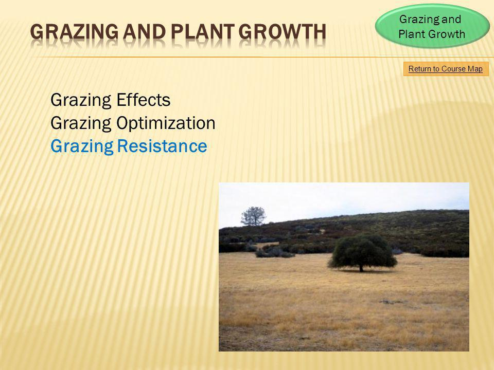 Mechanisms contributing to compensatory plant growth