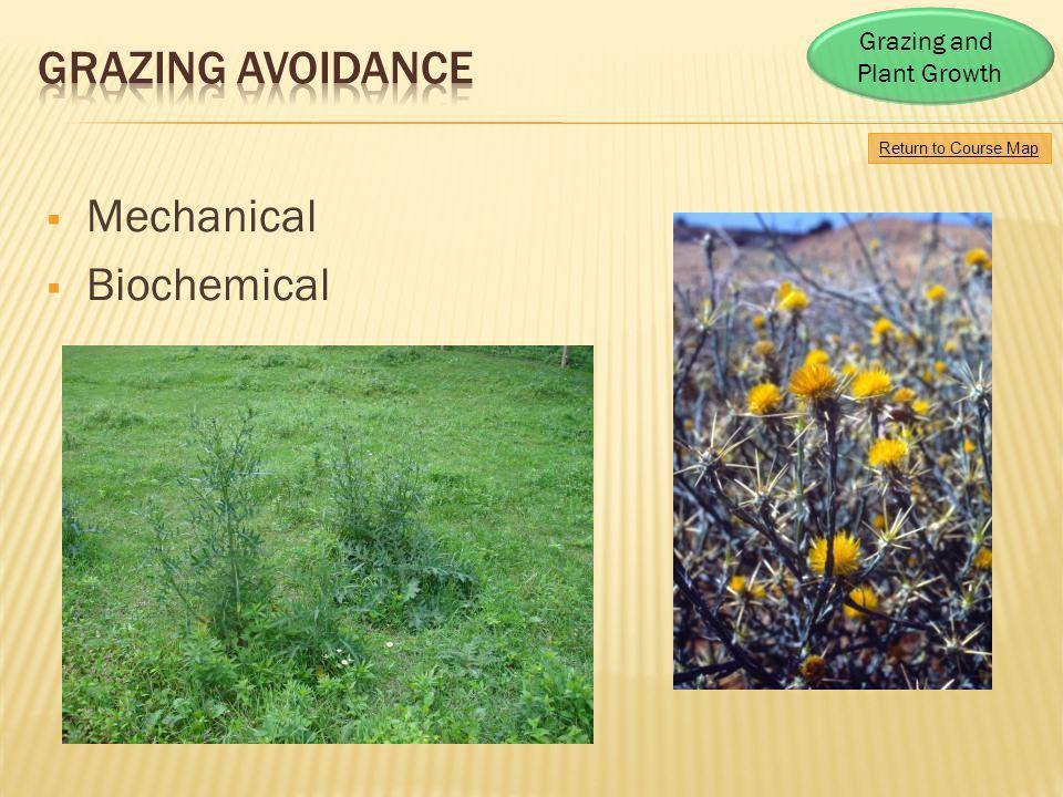 Grazing avoidance Mechanical Biochemical Grazing and Plant Growth