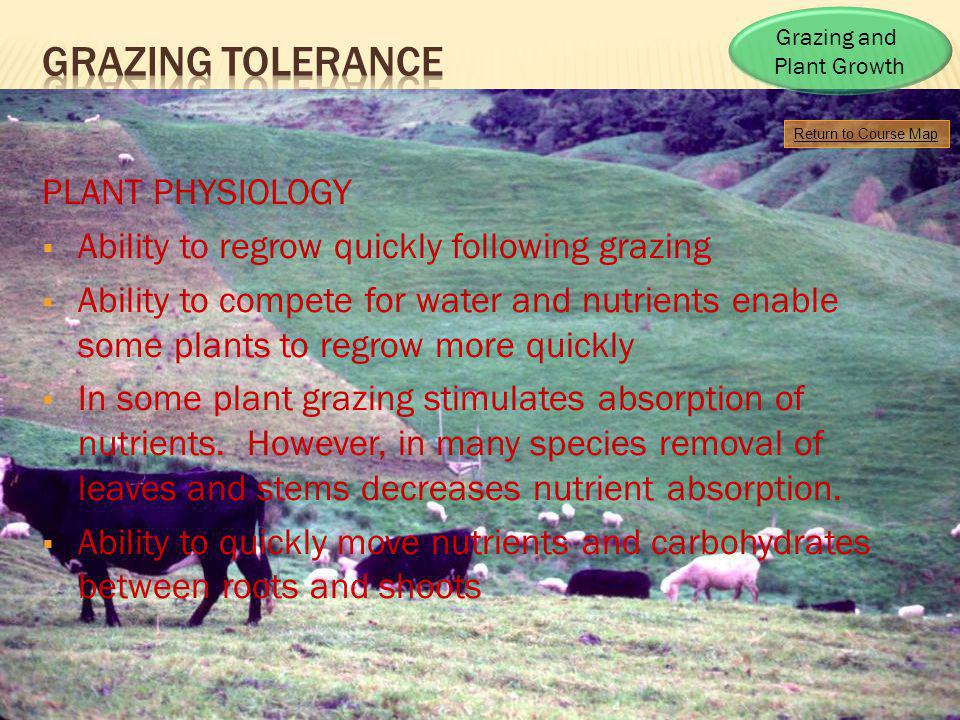 Grazing tOLERANCE PLANT PHYSIOLOGY