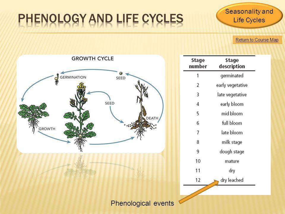 Phenology and Life Cycles