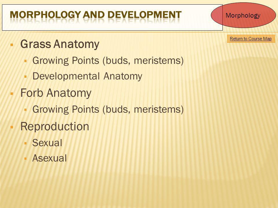 Grass Anatomy Forb Anatomy Reproduction