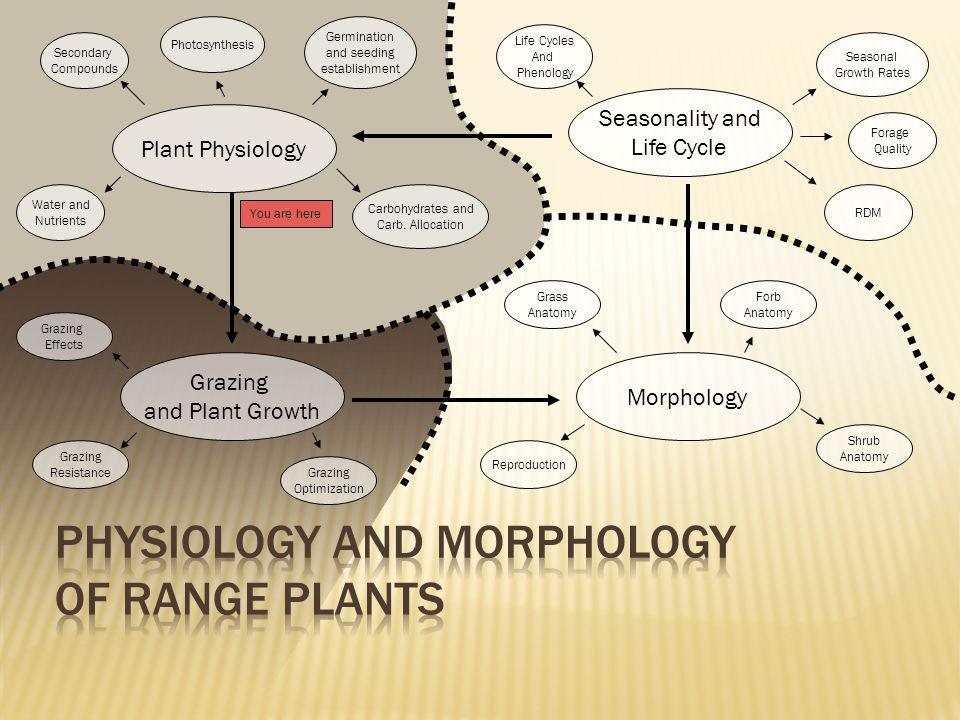 Physiology and Morphology of Range Plants