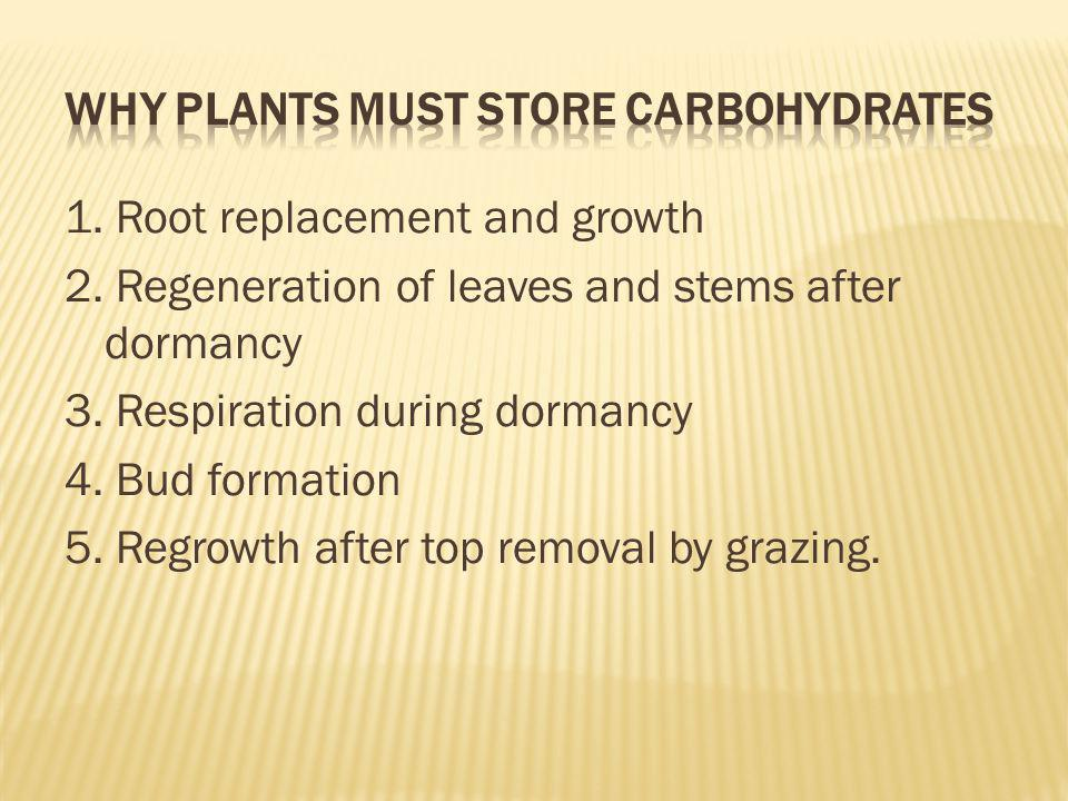 Why plants must store carbohydrates
