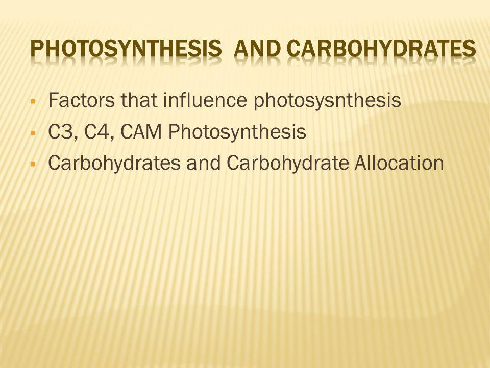 Photosynthesis and Carbohydrates