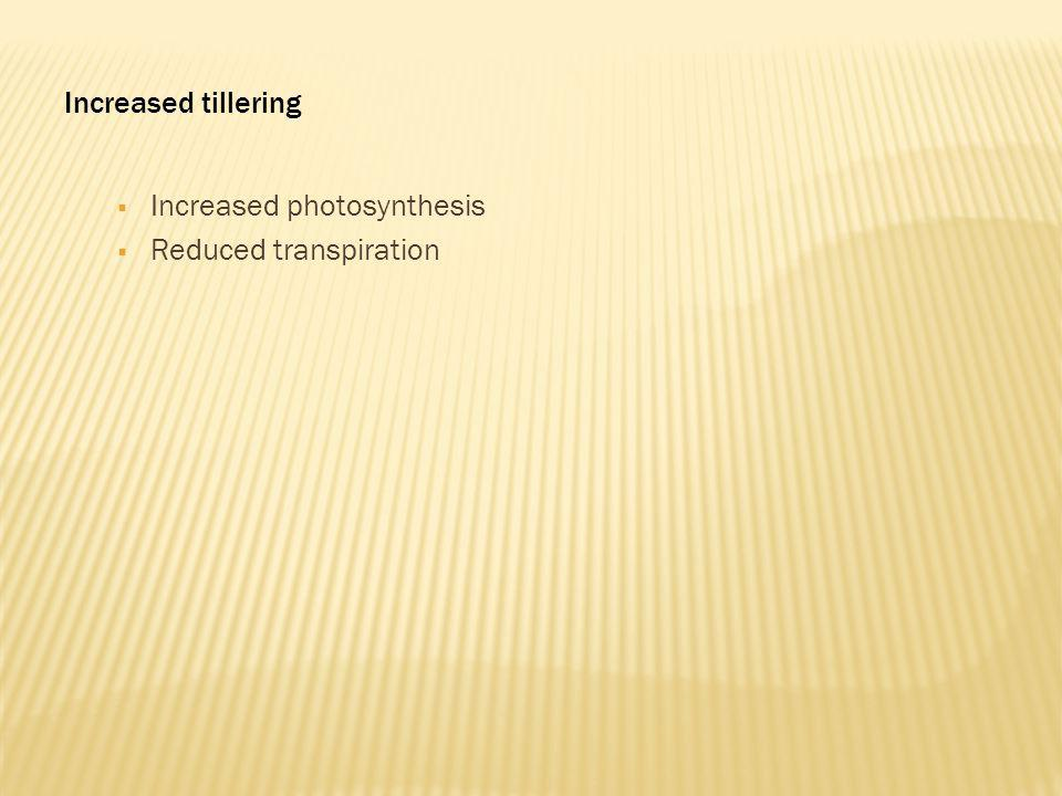 Increased tillering Increased photosynthesis Reduced transpiration