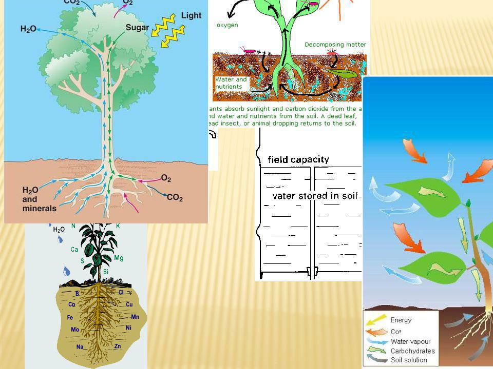 Plants use inorganic minerals for nutrition