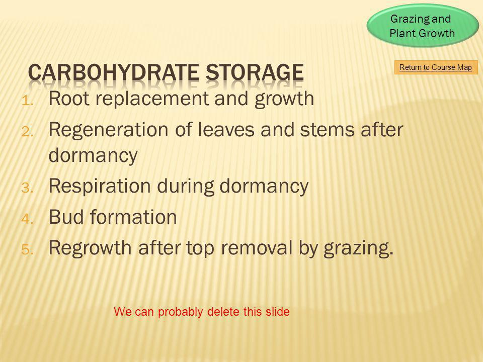 Carbohydrate storage Root replacement and growth